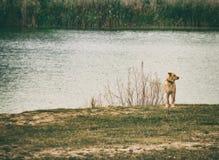 Hond bij meer, alleen stock fotografie