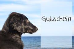 Hond bij Oceaan, Gutschein-Middelenbon Stock Afbeeldingen