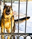 Hond bij omheining Stock Afbeeldingen