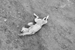 Hond bij Spel Stock Foto's