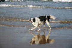 Hond bij strand royalty-vrije stock foto
