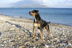 Hond bij strand Stock Afbeeldingen