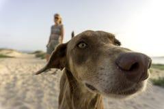 Hond bij strand Royalty-vrije Stock Fotografie