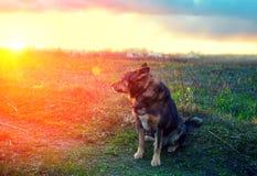 Hond bij zonsondergang Royalty-vrije Stock Afbeelding