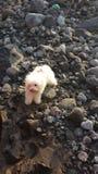 Hond in bijna uitgedroogde Guatemalaanse rivier Royalty-vrije Stock Foto