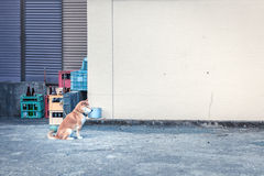 Hond in binnenplaats Royalty-vrije Stock Afbeelding