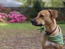 Hond in Binnenplaats die Te krijgen iets zoeken in stock afbeeldingen
