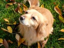 Hond in boomgaard Royalty-vrije Stock Afbeeldingen