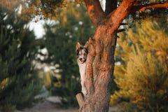 Hond border collie op een boom Royalty-vrije Stock Foto's
