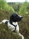 Hond in bos Royalty-vrije Stock Afbeeldingen