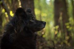 Hond in bos Stock Afbeeldingen