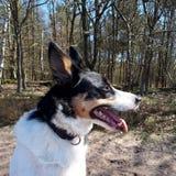 Hond in bos op een zonnige dag royalty-vrije stock afbeeldingen