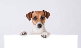Hond boven banner. stock afbeeldingen