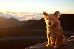 Hond bovenop de wereld stock fotografie