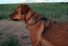Hond buiten Royalty-vrije Stock Afbeelding
