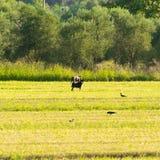 Hond buiten in een landbouwbedrijf met rond vogels Stock Afbeeldingen