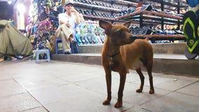 Hond buiten winkel, Hanoi, Vietnam Stock Fotografie