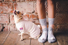 Hond in comfortabele kleding royalty-vrije stock afbeeldingen