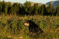 Hond in de aanplanting Stock Fotografie