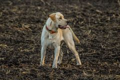 Hond in de aard royalty-vrije stock foto