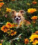 Hond in de bloemen Stock Afbeelding