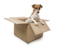 Hond in de doos Royalty-vrije Stock Afbeelding