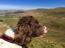 Hond in de heuvels Stock Foto