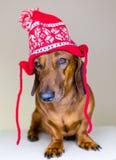 Hond in de hoed van de vakantie Stock Foto
