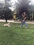 Hond de Opleiding, wacht Bevel, gehoorzaamheid royalty-vrije stock foto's