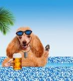 Hond in de pool royalty-vrije stock afbeelding