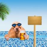 Hond in de pool stock foto's