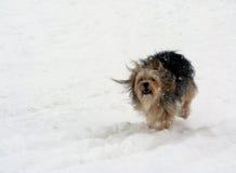 Hond in de sneeuw Royalty-vrije Stock Fotografie