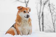 Hond in de sneeuw Stock Fotografie