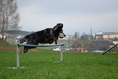 Hond in de sprong Royalty-vrije Stock Foto