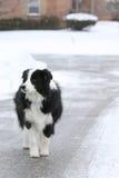 Hond in de straat wordt verloren die Royalty-vrije Stock Afbeelding