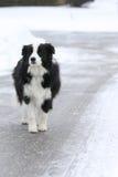 Hond in de straat wordt verloren die Royalty-vrije Stock Fotografie