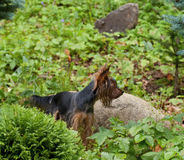 Hond in de Tuin Royalty-vrije Stock Foto