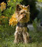 Hond in de Tuin Royalty-vrije Stock Afbeelding