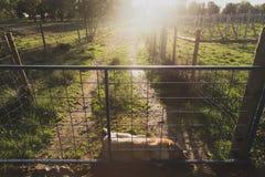 Hond in de weg Royalty-vrije Stock Afbeeldingen