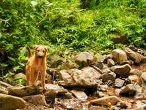 hond in de wildernis Stock Afbeeldingen