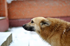 Hond in de winter Stock Fotografie