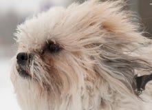 Hond in de winter Royalty-vrije Stock Fotografie