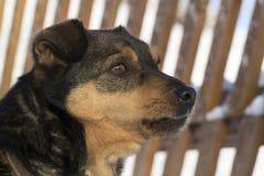 Hond in de winter Stock Fotografie