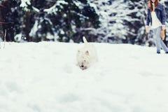 Hond in de winterlandschap royalty-vrije stock foto