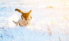 Hond in de wintersneeuw die in werking wordt gesteld Stock Foto