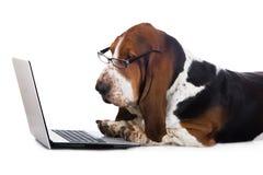 Hond die aan een computer werken Stock Afbeelding