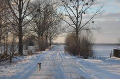 Hond die aan lens lopen Stock Fotografie