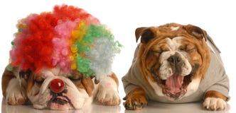 Hond die bij clown lacht Stock Foto