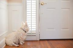 Hond die bij de deur wachten stock foto's