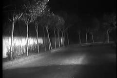 Hond die bij de lege landweg bij nacht lopen stock videobeelden